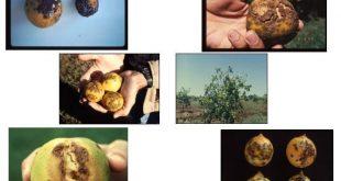 شانکر مرکبات علوم کشاورزی و منابع طبیعی
