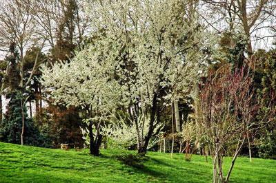 Iranian gardens - bagh-e Sad Abad