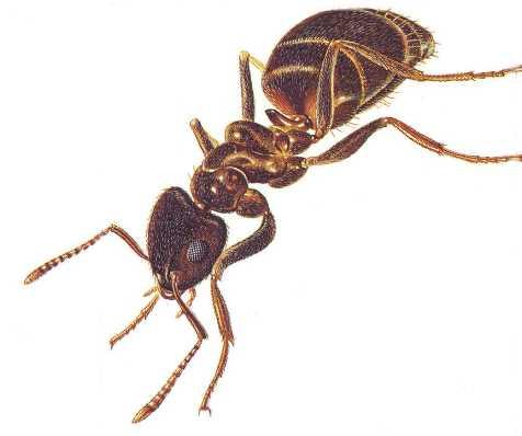 Ant%201%20002.jpg