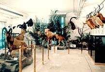 G:\muozh\نگاهی گذرا به تاریخچه موزه و موزه داری در ایران و جهان_files\12955711921714544214241349016614720436.jpg