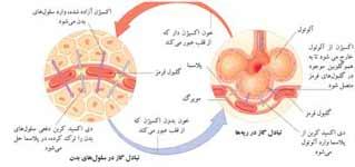 http://www.boali.com/atlas/images/respiratory_system-s3.jpg